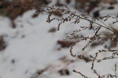 Seque las hierbas Fotografía de archivo libre de regalías