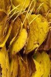 Seque las hojas Imagen de archivo libre de regalías