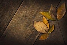 Seque las hojas Fotos de archivo