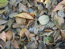 Seque las hojas Foto de archivo
