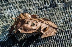 Seque las hojas Foto de archivo libre de regalías
