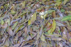 Seque las hojas Imagenes de archivo