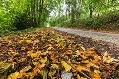 Seque las hojas caidas en el camino forestal imagenes de archivo