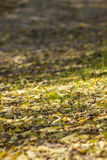 Seque las hojas caidas en un camino de tierra del bosque - encendedor fotografía de archivo