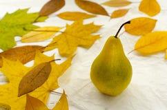 Seque las hojas de otoño coloreadas alrededor de la pera en el documento de pergamino blanco sobre la tabla de madera del vintage Imágenes de archivo libres de regalías