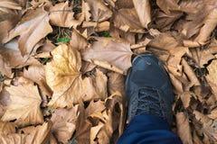 Seque las hojas en el parque en otoño fotos de archivo libres de regalías