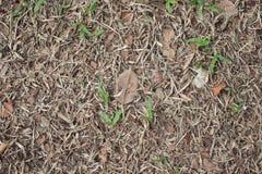 Seque las hojas en hierba seca Fotos de archivo