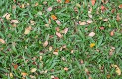 Seque las hojas en hierba verde Foto de archivo libre de regalías