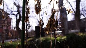 Seque las hojas en los rayos del sol de la abstracción de la luz metrajes