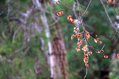 Seque las hojas en un árbol foto de archivo libre de regalías