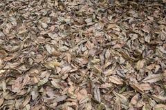 Seque las hojas para el fondo Foto de archivo libre de regalías
