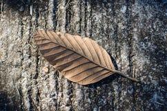 Seque las hojas que caen en el piso fotos de archivo libres de regalías