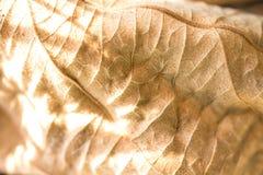 seque las hojas y el fondo de la sombra y texturicelos Imagen de archivo libre de regalías