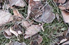 Seque las hojas y la hierba con el fondo de la escarcha fotos de archivo