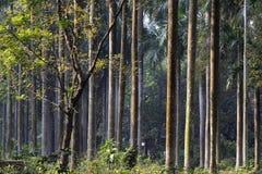 Seque las hojas y los árboles, backlground cambiante de las raíces del árbol del invierno Fotografía de archivo