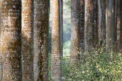 Seque las hojas y los árboles, backlground cambiante de las raíces del árbol del invierno Foto de archivo