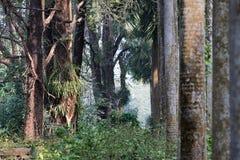 Seque las hojas y los árboles, backlground cambiante de las raíces del árbol del invierno Foto de archivo libre de regalías