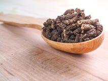 Seque o chá fermentado do angustifolium de Chamerion da azaléia igualmente conhecido como o grande willowherb ou o willowherb de  Imagens de Stock Royalty Free