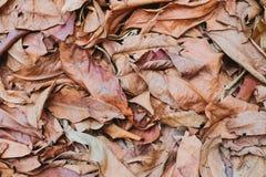 Seque o fundo das folhas Fotografia de Stock