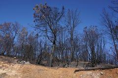 Seque o montanhês queimado de Califórnia carbonizado e devastado por um incêndio violento da floresta fotos de stock