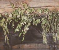 Seque o ramo das folhas Foto de Stock Royalty Free