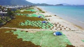 Sequedad de la alga marina en la opinión del abejón de la orilla de mar Mar azul y alga marina del paisaje aéreo en costa almacen de video