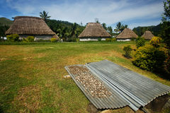 Sequedad de la raíz de Kava en el pueblo de Navala, Viti Levu, Fiji Fotos de archivo libres de regalías
