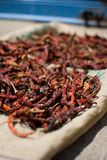 Sequedad de los chiles en un mercado Foto de archivo