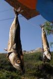 Sequedad de los pescados Fotos de archivo libres de regalías