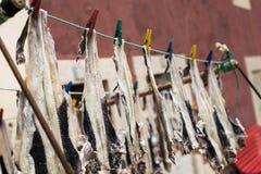 Sequedad de los pescados en aire abierto Foto de archivo libre de regalías