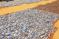 Sequedad de los pescados en el sol Foto de archivo libre de regalías