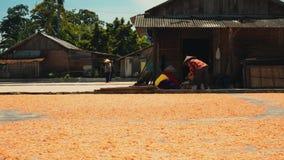 Sequedad del camarón en la tierra en Cilacap, Java, Indonesia almacen de metraje de vídeo