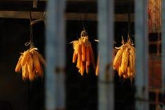 Sequedad del maíz en el sol en una cabaña imagenes de archivo