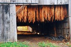 Sequedad del tabaco en una granja meridional de los E.E.U.U. Foto de archivo libre de regalías