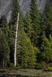Sequedad derecha sola encima del árbol imagenes de archivo