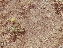 Sequedad extrema Hierba muerta marrón seca imagen de archivo libre de regalías