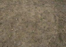 Sequedad marchitada de la hierba seca, ninguna lluvia en cambios de clima del verano, fondo imagenes de archivo