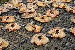 Sequedad rayada de los pescados del snakehead Foto de archivo libre de regalías