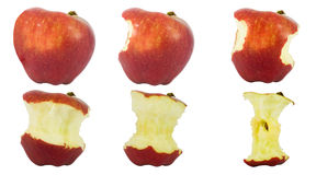 Sequence of an apple being eaten. Isolated on white background Royalty Free Stock Photography