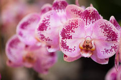 Sequence. Row of Orchids on display Stock Photos