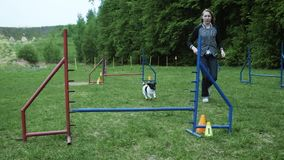 Sequence with slow motion racing in competition, animal agility race with dog running and doing slalom. Sequence with stock video