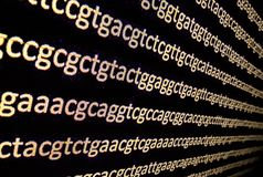 Sequencing the genome. Background on the subject of DNA sequencing, symbols of nucleotide bases on the dark stock photos
