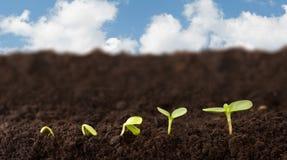 Sequenza crescente della pianta Immagini Stock