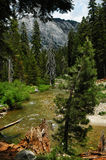 Sequia Wald Lizenzfreies Stockfoto