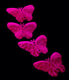 Sequin butterflies  Stock Images