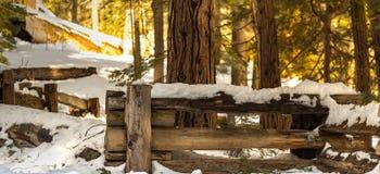 Sequoia δέντρα Στοκ εικόνα με δικαίωμα ελεύθερης χρήσης