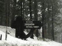 Sequoia εθνικό δρυμός Στοκ Φωτογραφίες