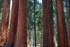 Sequoia εθνικό πάρκο, ΗΠΑ Στοκ φωτογραφία με δικαίωμα ελεύθερης χρήσης