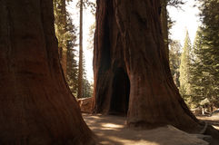 Sequoia εθνικό πάρκο, Καλιφόρνια, ΗΠΑ Στοκ φωτογραφία με δικαίωμα ελεύθερης χρήσης