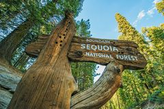 Sequoia εθνικό δρυμός Στοκ φωτογραφία με δικαίωμα ελεύθερης χρήσης